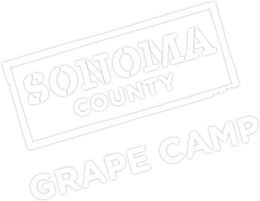 Sonoma County Grape Camp
